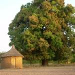 Mein Zimmer unter dem Mangobaum
